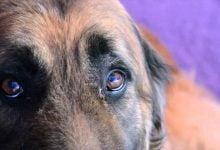 Photo of VIDEO: Vecinos denunciaron a una familia de amarrar y maltratar a su perro sin pudor